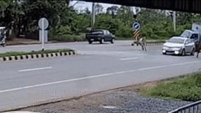 Tài xế 'chấp nhận' cho xe lật nhào để tránh đâm phải bò sang đường