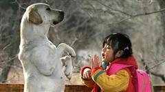 Bé gái bị bố 'lừa' gả cho hàng xóm, chó cưng có pha cứu nguy ngoạn mục và loạt trải nghiệm được 'vật trả ơn' khó tin trong cuộc sống