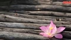 Yên bình giữa mùa sen Hang Múa