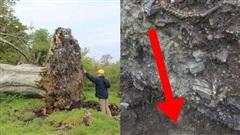 Bão lớn làm bật gốc cây cổ thụ để lộ bộ xương người bên dưới, tưởng là một vụ giết người giấu xác nhưng sự thật hoàn toàn khác