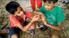 Hai đứa trẻ Ấn Độ dùng tay không giải cứu con rắn bị mắc vào lưỡi câu