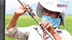Người đàn ông một mình 'cứu khát' 240 ha lúa của làng bị phong tỏa