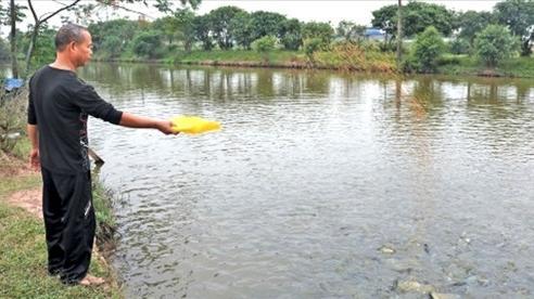 Hà Nội đảm bảo kết nối, cung ứng thủy sản phục vụ Nhân dân