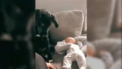 Chú chó quyết không cho ai chạm vào bé sơ sinh kể cả mẹ của bé