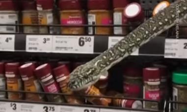 Clip khách hàng phát hiện con trăn dài 3m khi đang mua sắm ở siêu thị