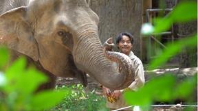 Voi, hà mã, tê giác ở Thảo Cầm Viên SG vui mừng vì được cứu sống giữa dịch