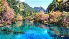 7 khu rừng ấn tượng ' đẹp hút hồn' du khách