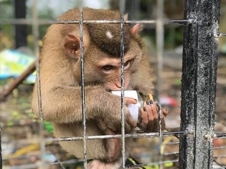 Trào lưu nuôi thú cưng: Cảnh báo nguy cơ truyền nhiễm bệnh tật