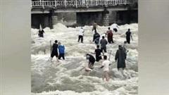 Hàng trăm người dân lao xuống sông chờ hồ xả lũ để bắt cá khổng lồ