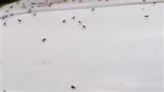 Hàng ngàn con nhện 'nhảy dù' gây ác mộng ở Bắc Ireland