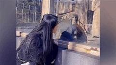 Khoảnh khắc chú khỉ giật mình sợ hãi khi nhìn thấy cô gái gây sốt