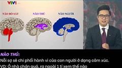 Clip VTV phân tích các trường hợp vi phạm giãn cách ở Hà Nội tuần qua: 'Mỗi người đang dùng 1 phần não khác nhau để đối diện với Covid-19'