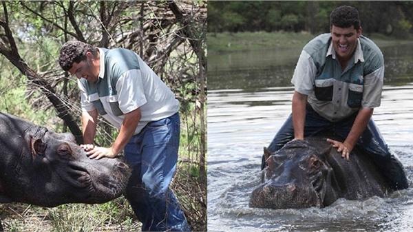 Nuôi hà mã 1.200kg và xem như thú cưng, người đàn ông không ngờ một ngày bị chính con vật xé xác chết không toàn thây